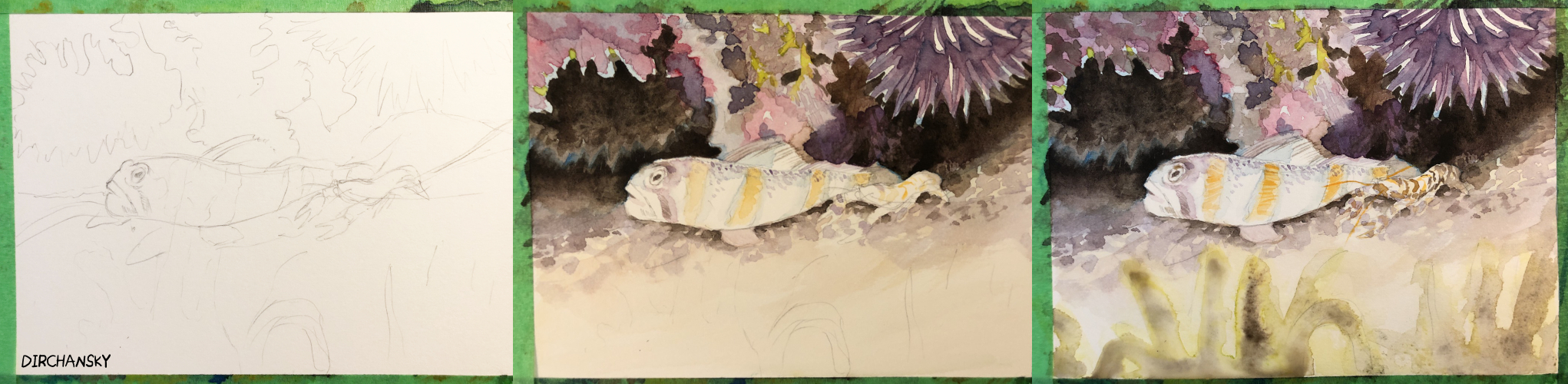 Photo collage of 3 images, showing progressive progress of the goby and shrimp painting---from sketch, then from background to midground to foreground colours/shading.
