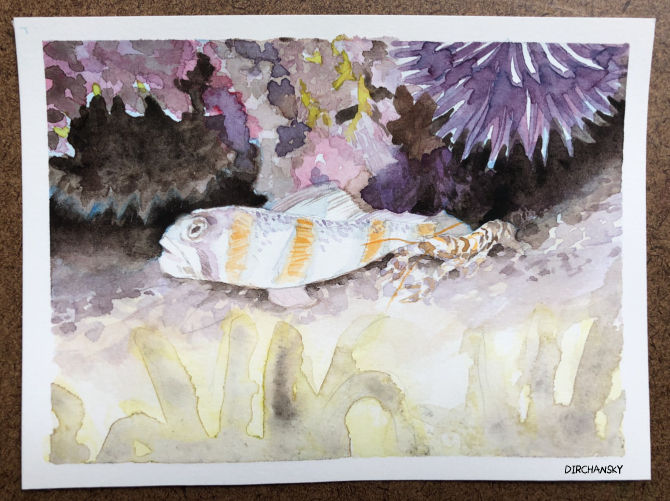 Photo of a postcard sized painting of a goby and shrimp on a pebbled ground, surrounded by various aquatic flora and fauna.
